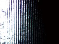側視タイプを使った観察画像